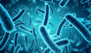 Illustration microbiote